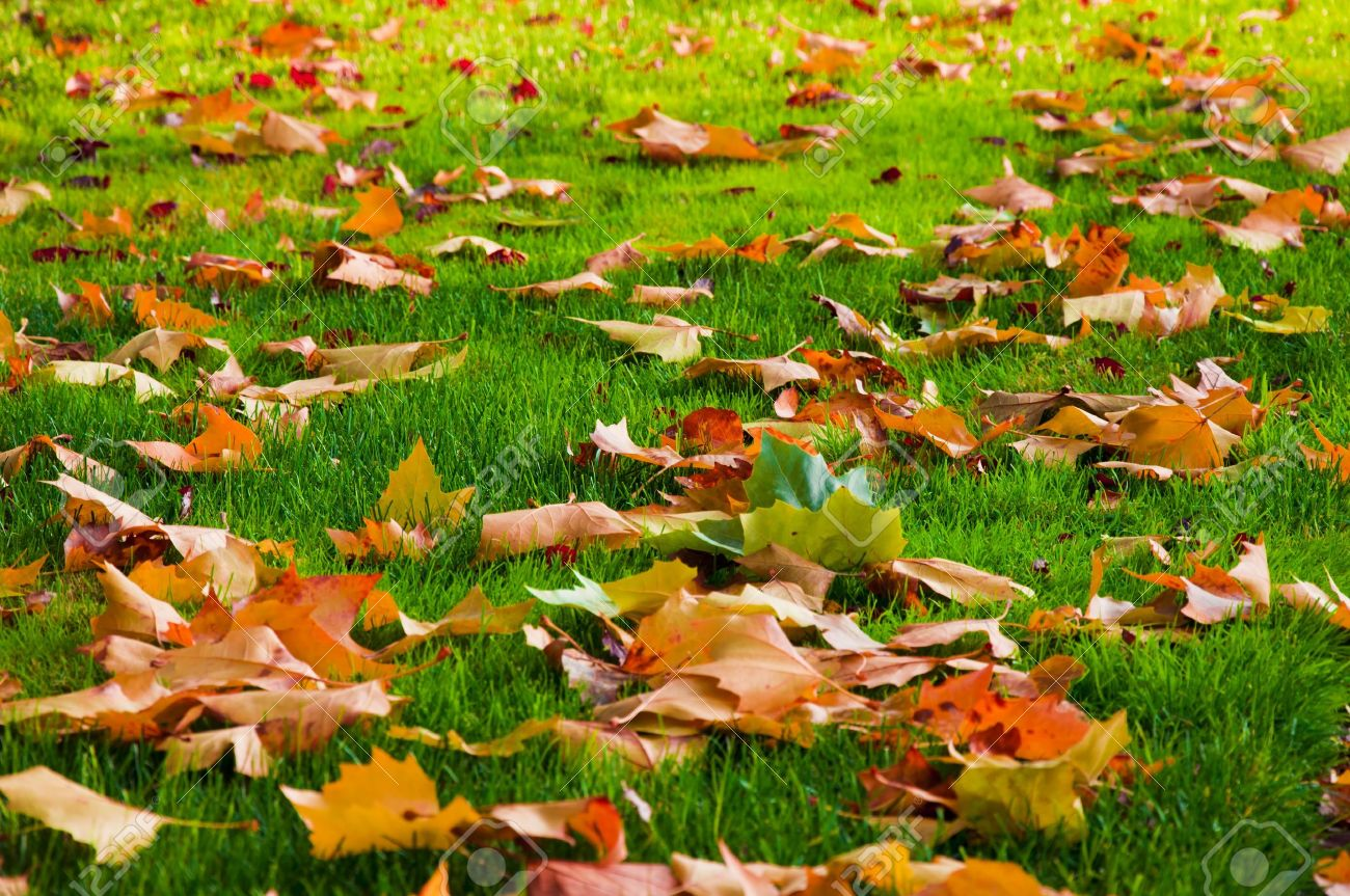 6 Autumn Lawn Care Tips